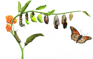 Caterpillar to Butterfly transformation